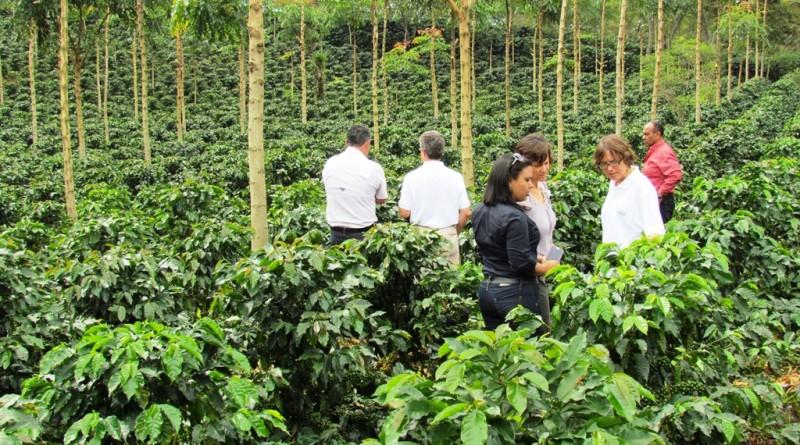 Finca-de-cafe-especial-de-COCAFCAL-visitada-por-la-mision