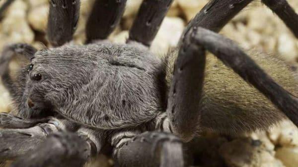 Nueva especie arana