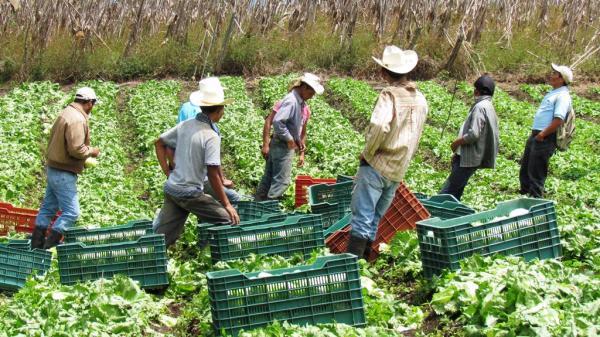 empresas agricolas