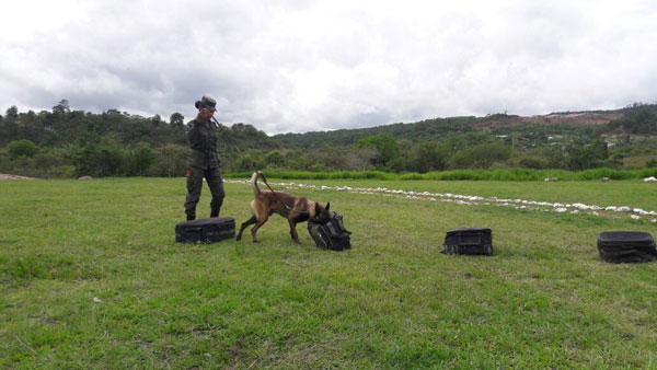 Batallón Canino