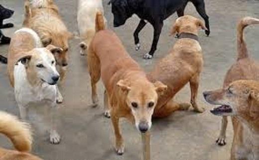 Perros India1
