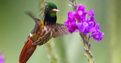 Avistan 28 nuevas especies de aves en Honduras