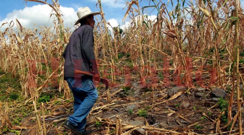Honduras corredor seco