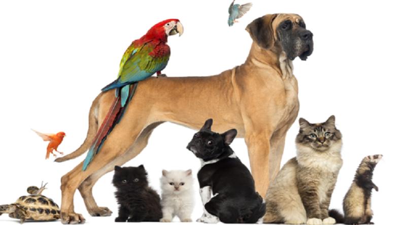 animal proteccion
