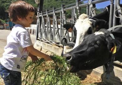 Cariño y tecnología, para que las vacas produzcan más leche