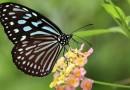Asiste al primer Festival de la Mariposa Esmeralda en el Lago de Yojoa