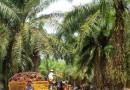 Honduras podría ser parte del Consejo Mundial de Palma Aceitera