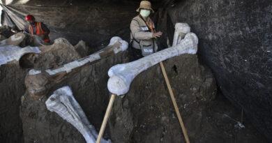 Desentierran el mayor cementerio de mamuts del mundo en el lugar que ocupará el nuevo aeropuerto de la Ciudad de México